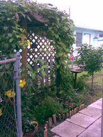 Garden in the corner